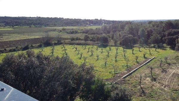 L'oliveraie en restanques